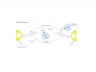solid-phase peptide synthesis
