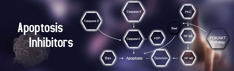 Apoptosis Inhibitors