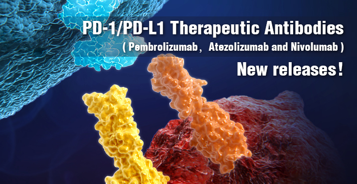 PD-1/PD-L1 therapeutic antibodies